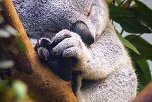 Любимые животные / О взаимоотношениях между животными и животных с человеком
