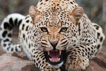 Natureza Animais Selvagens