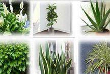 Socorro plantas