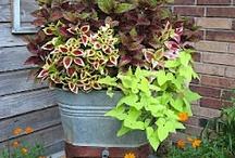 kerti ötletek, növények