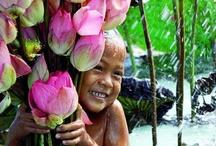 luscious lotuses