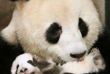 pandas und vieles mehr