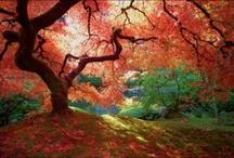 * Autumn pics *