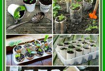 Trädgård - så & plantera