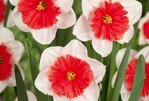 André Willemse aime / Découvrez les plantes préférées d'André Willemse, grand spécialiste du jardin.