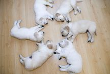 Puppies / by Chris Ford