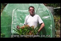 Green: Bromeliads