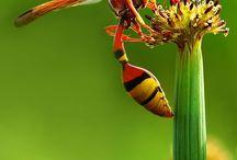 Insectos y otros monstruos / Insectos y otros monstruos....