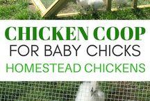 Mum chicken coop