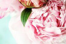 Flowers / Szépségek
