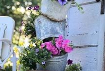 Garden / by Carolyn Adams