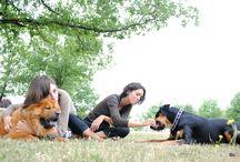 Les chiens c'est trop bien !!!! =) / Juste parce que les animaux c'est la vie <3