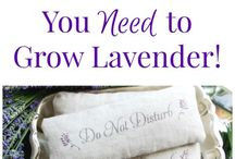 Craft from Lavender