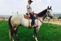 Cavvy Savvy Featured Horses for Sale