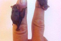 Bat-Denevér