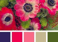 Paleta colores