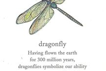 Dragonflies / Dragonflies are symbols of good luck.  Borrow some of my favorites for your board.