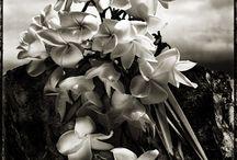 Real Flowers / by Donatella Cinzano