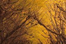| tree tunnels