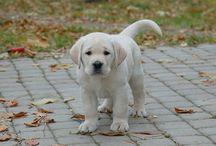 Too Cute! / by Heather Schall-Sokasits