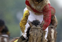DANIEL'S HORSES / HORSES