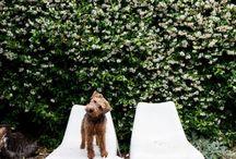 Puppies I love!  / by Kelly Lovett