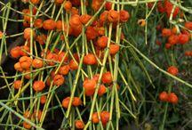 Rezeptfrei Ephedra kaufen online / Online ohne Rezept Produkte mit den Wirkstoffen der Ephedrapflanze bestellen