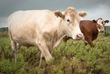 Increase Productivity With Wholesome Cattle Feeds.