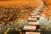 Footsteps / by Barbara Wade