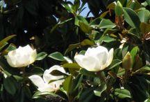 DELFINIA GARDENS / Delfinia Gardens are a haven of tranquil beauty.