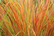 Grasses Gräs Ruohot