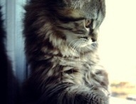 Contemplative cats