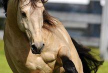 Hors (lovak)
