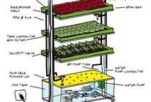 Urban farming / Alles van hydroponic tot bijenkorf