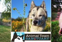Rescue Spotlight / Highlighting animal rescue organizations and pet philanthropy.