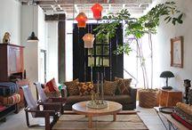 solitérne rastliny v interiéri