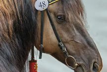 Beautiful horses / Pictures too beautiful not to pin!