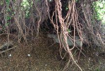 Природные фоточки Лисы