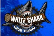 Book Shark Diving In Cape Town Helps The Adventurous Book The Best Experience