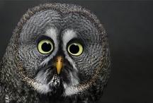 Whooooo Likes Owls? / by Nyla Parker
