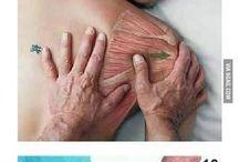 masaż/ anatomia