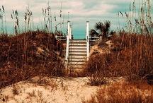 Beach Vacation / Beach vacation, homes, sand, waves, salt water, ocean, vacation, fun, memories, summer, west coast, east coast / by Marley Weddington