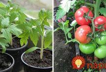 Pěstování, zahradničení