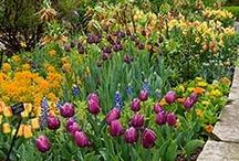 Designs / by Chicago Botanic Garden