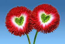 Virágok, Zenék ,kertek / Ország út vigyél haza ....http://ek24.hu/M30orszagu