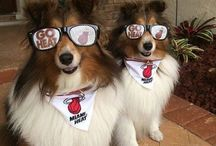 Furry HEAT fans / by Miami HEAT