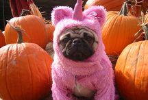 Halloween Dogs / www.poochandcompany.co.uk