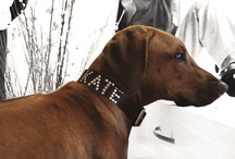 Made For Dogs / by Simone Bosbach
