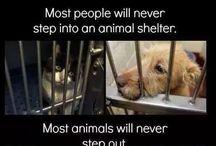 Don't hirt animals save them
