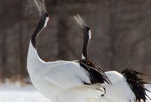 釧路湿原 / 釧路湿原の魅力を紹介しています。